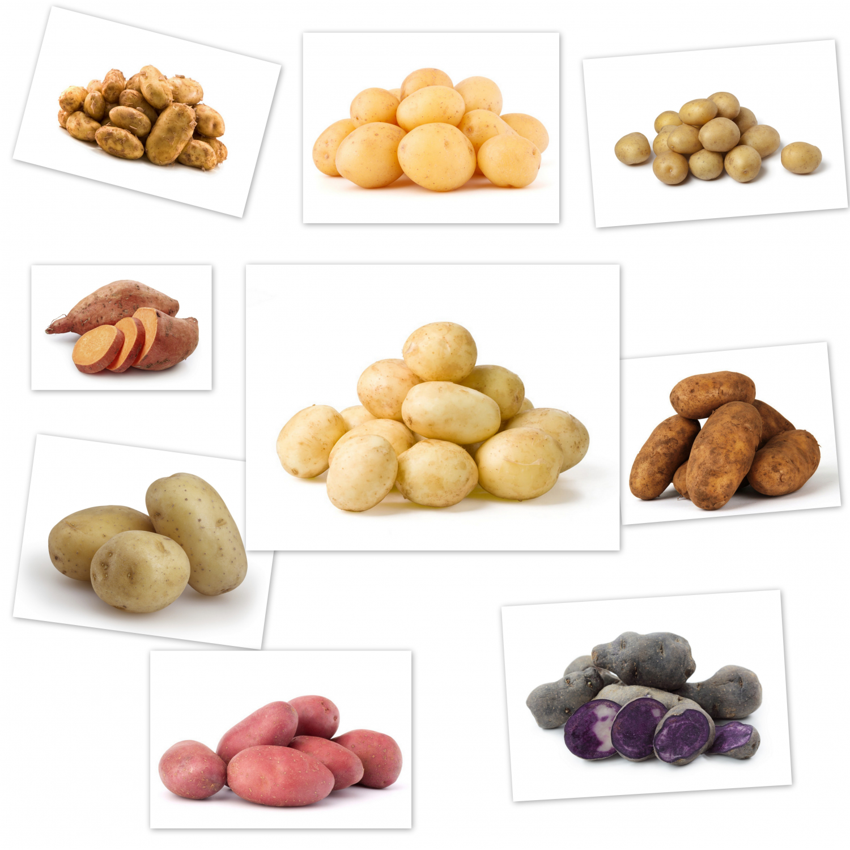 økologiske kartofler pris